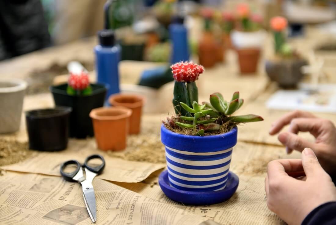 イベントレポート「お部屋に飾ろう!多肉植物の寄せ植え鉢づくりワークショップ」でマイ寄せ植え作りました。